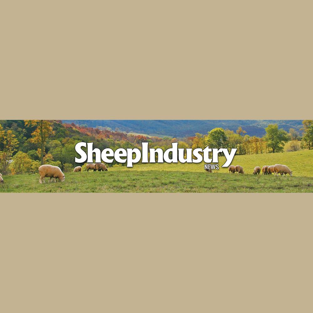 american-sheep-industry